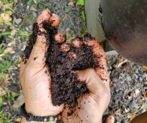 10 Super Simple Ways To Use Coffee Grounds In The Garden