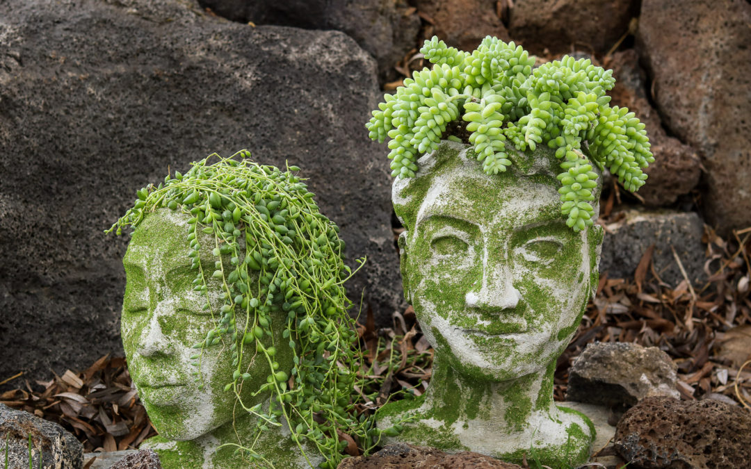 Concrete planters that look like sculpted heads