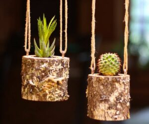 How To Make An Awesome Log Planter For Succulents and Other Types of Plants
