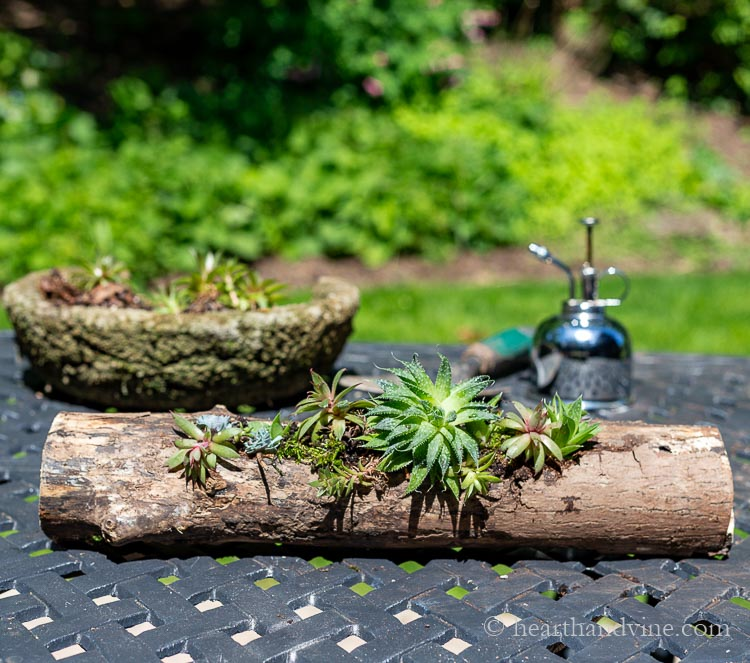 Wooden logs turned into succulent planters