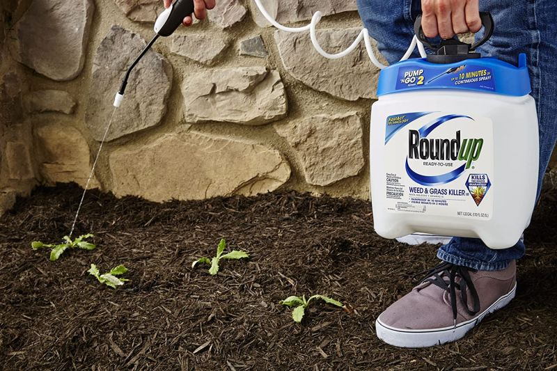 Keep Your Lawn Tidy With Best Weed Killer