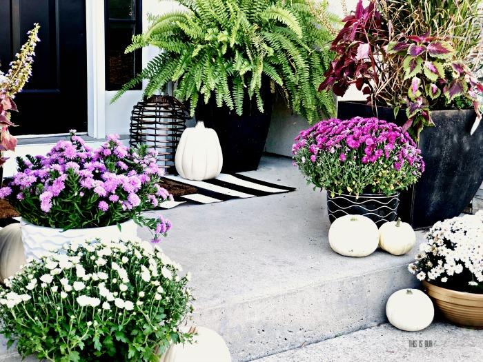 Ceramic Pots for Visual interest