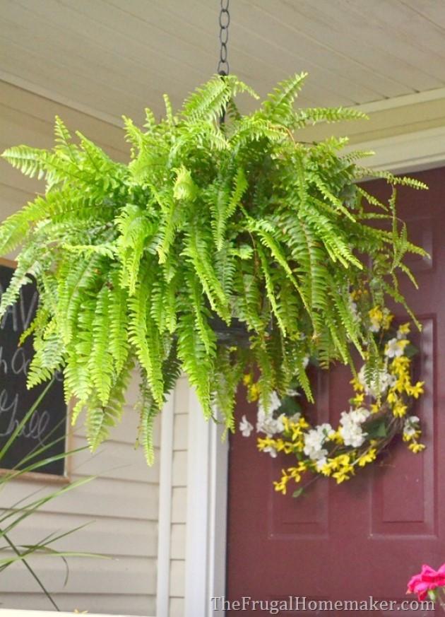 Fall Porch Hanging Ferns