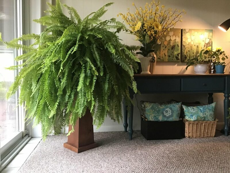 Popular Indoor Plants For Every Home