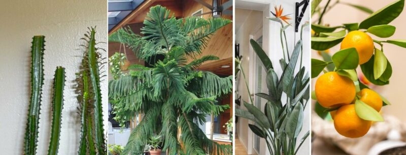 How To Choose The Best Indoor Trees For Your Home
