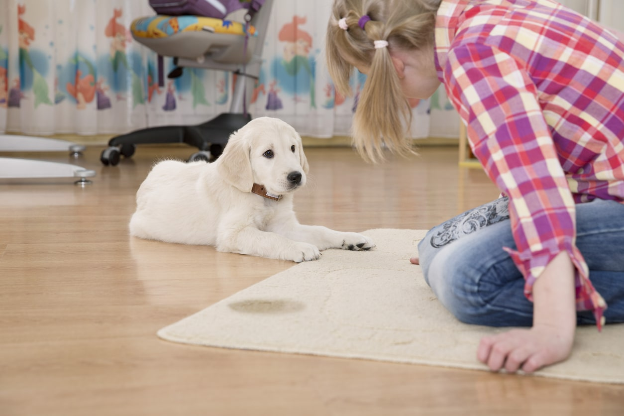How To Find Dog Pee On Carpet
