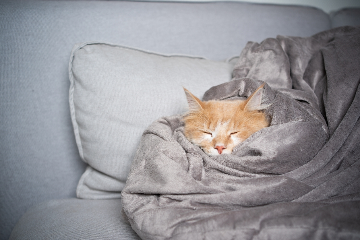 What Fabric Is Used for Fluffy Blankets?