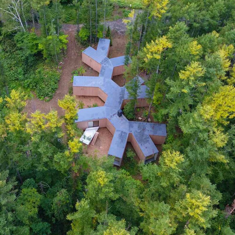 House Shaped Like A Giant Branch In One of Japan's Beautiful Forests