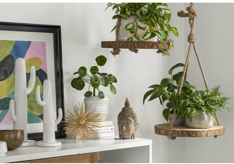 Where To Buy Plants Online To Ensure They Are Healthy