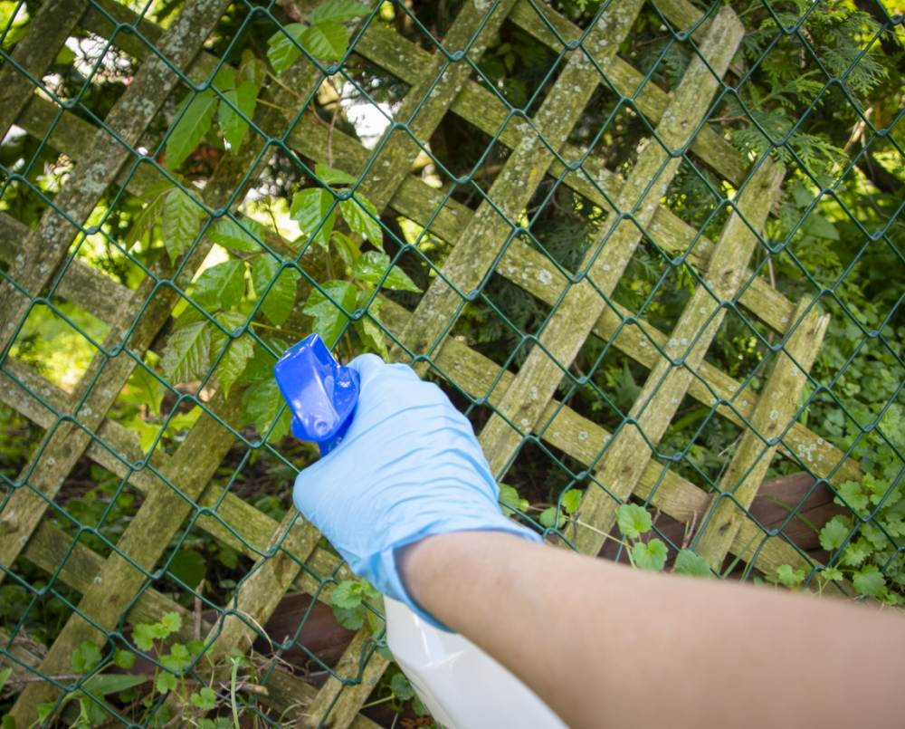 How To Kill Poison Ivy With Herbicides