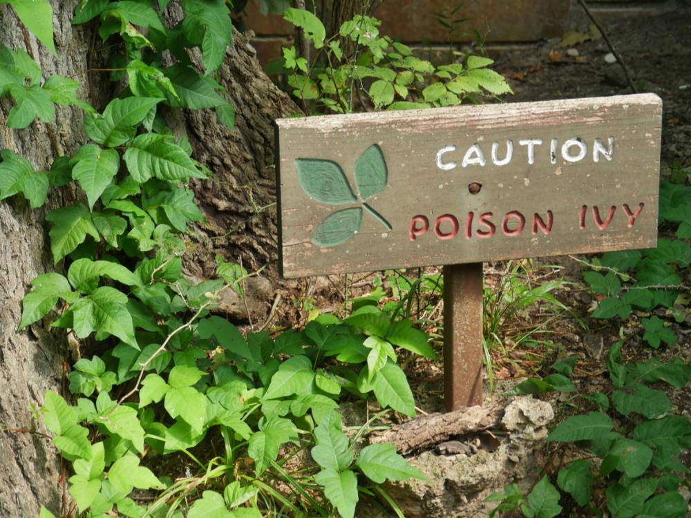 How To Kill Poison Ivy Without Herbicides