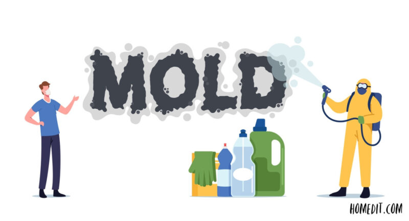 How To Get Rid Of Mold – Step By Step Guide