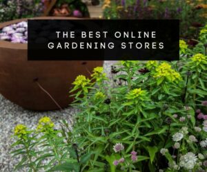 38 Places to Order Your Gardening Needs Online