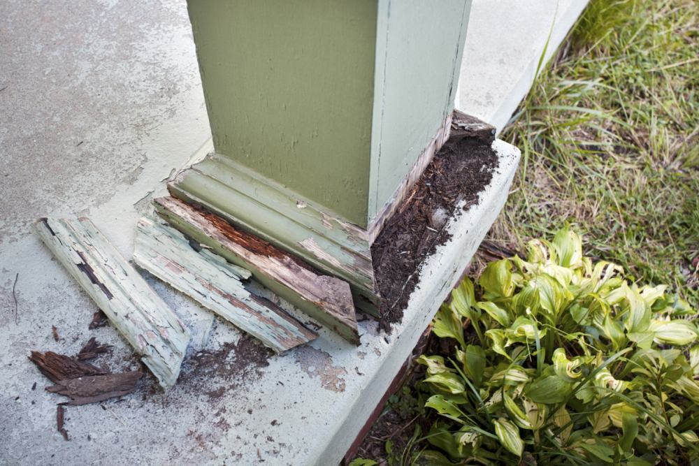 How To Get Rid Of Termites Of Any Kind