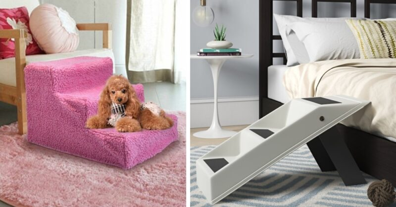 Dog with Mobility Issues? Consider Dog Stairs For Fed