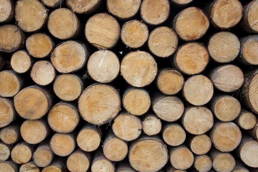 Long-burning firewood