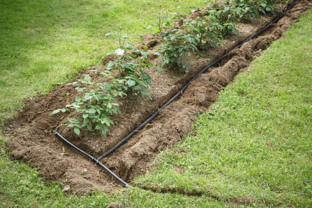 The Soaker Hose Is The Best Hands-Free Irrigation Setup
