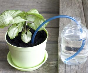 20 DIY Self-Watering Planters That You Can Craft Today