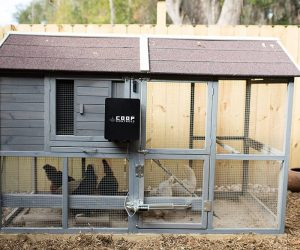 Can You Add an Automatic Door to a Chicken Coop?