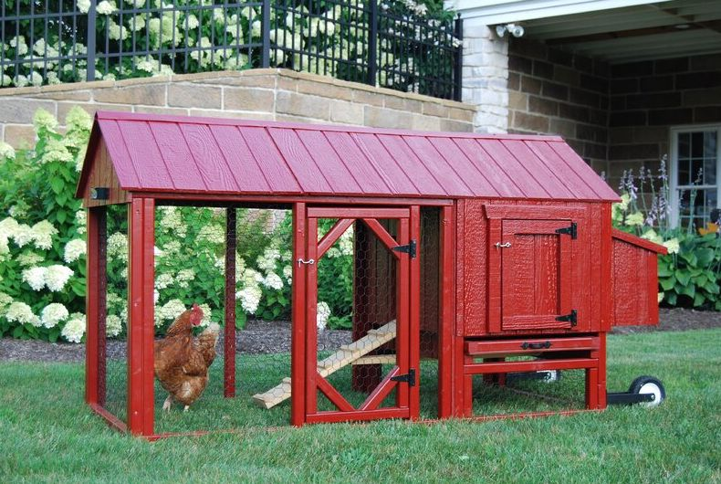 Raise Chickens of Your Own with the Best Chicken Coop