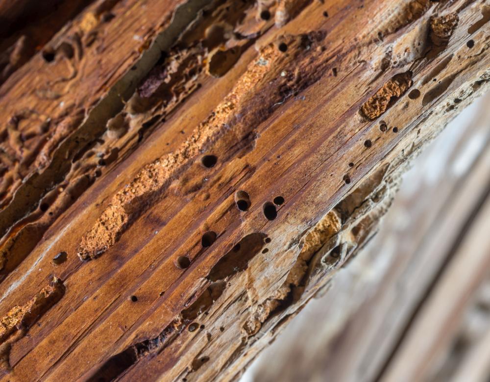 Wood Mites