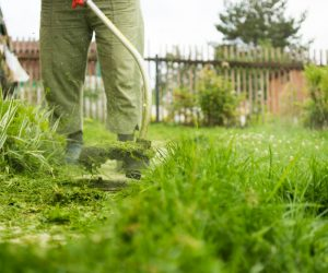Keep Your Bushes Trimmed with these Bush Cutters