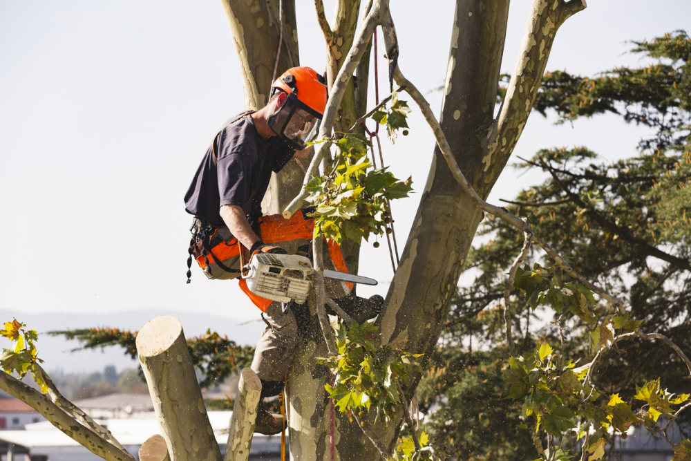 Cutting The Branches