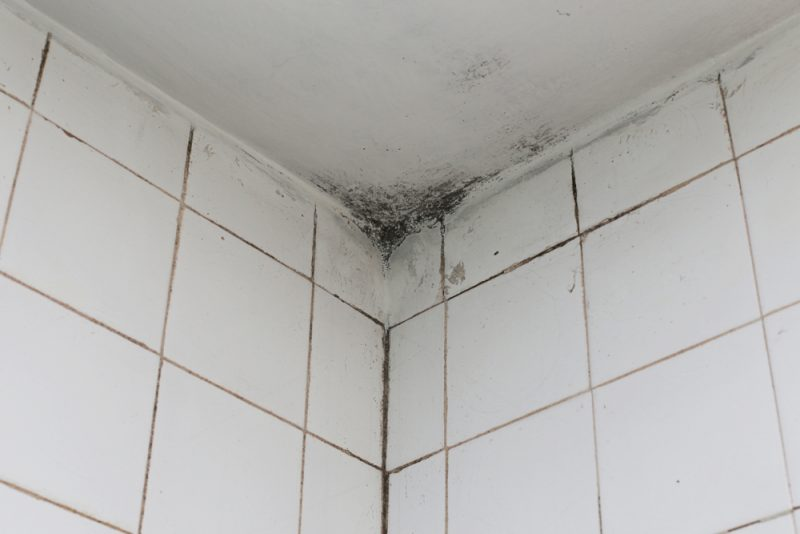 Easiest Solution To Mold On Bathroom Ceiling