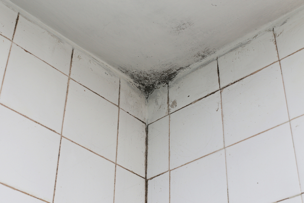 Removing Mold On Bathroom Ceiling