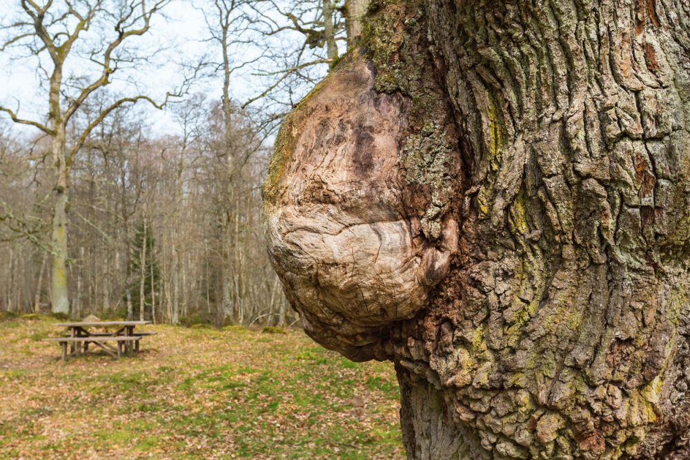 What Is Burl Wood Made From Real Tree Burls