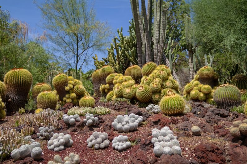 Create The Perfect Cactus Landscape With These Gorgeous Cacti