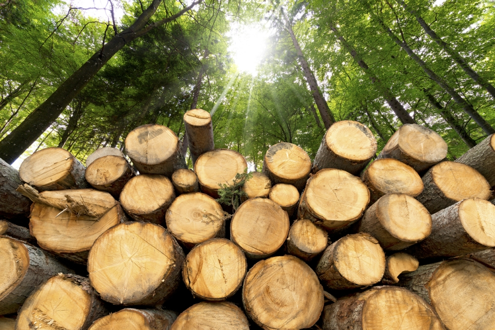 How Much Does Rough Sawn Lumber Cost