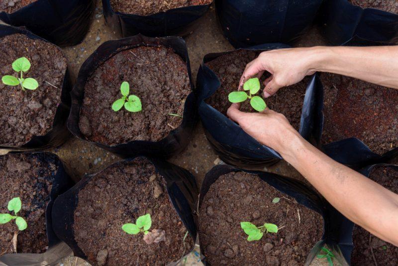 今年获得你的花园的最佳种植袋