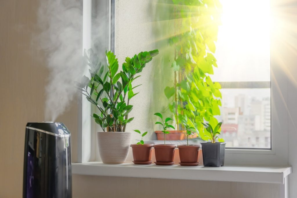 best Humidifiers for Plants