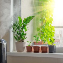 small humidifier for plants