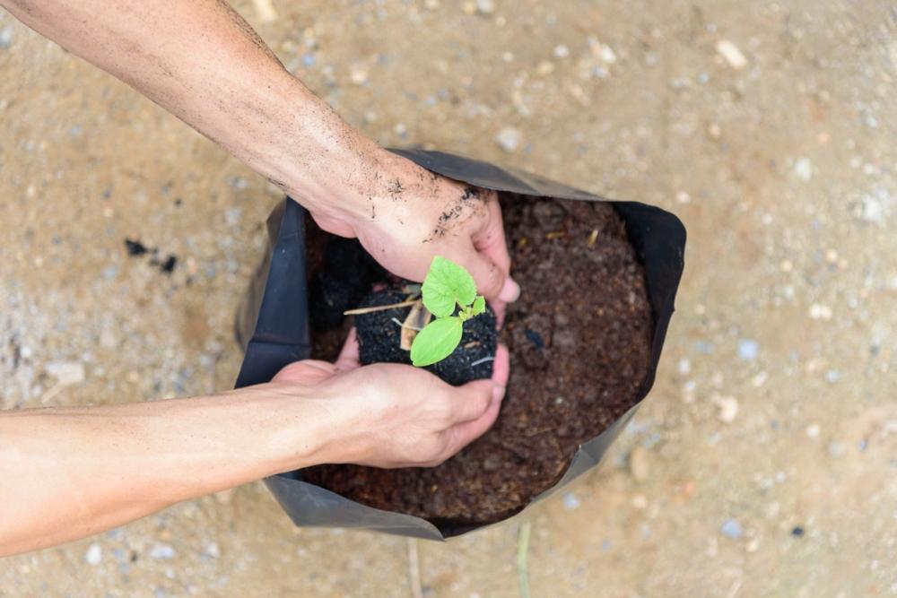 使用种植袋的园林提示