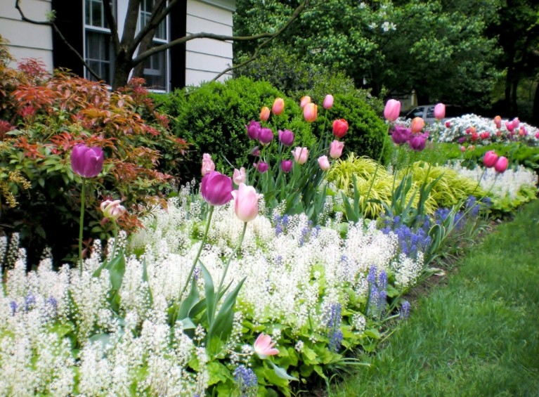 Beautiful spring bulb front house