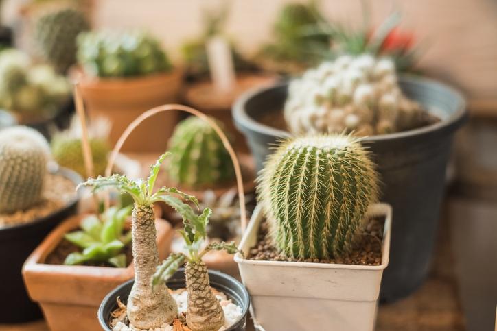 Choosing The Richt Succulent