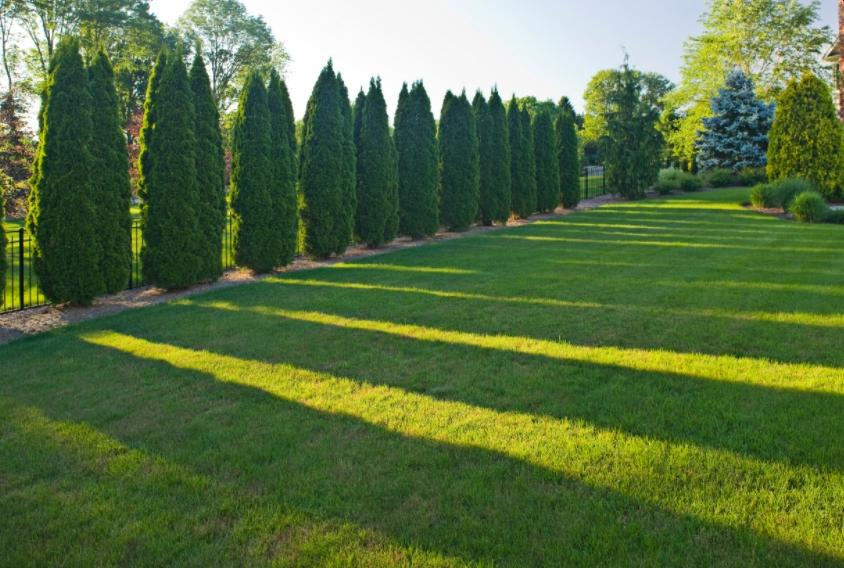 Emerald Green Arborvitae Spacing