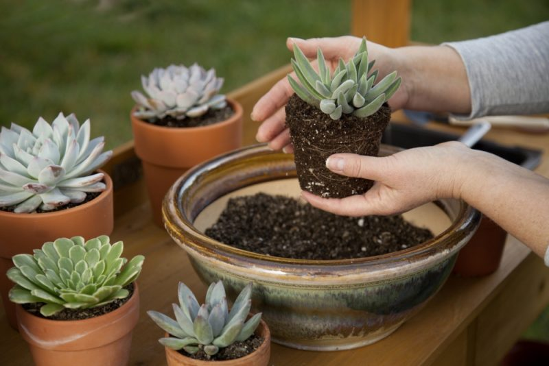 A Guide to Potting Soil: Tips for Planting and Growing