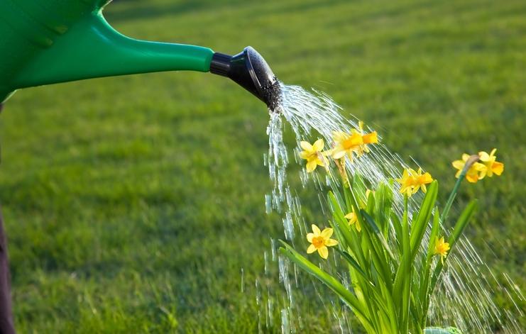 will vinegar kill grass
