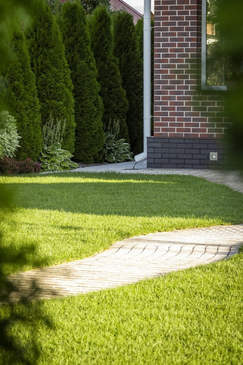 What are the Best Shrubs for Privacy?