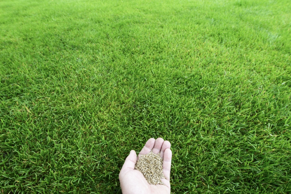 Fast-Growing Grass Seed