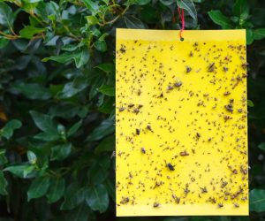 Get Rid of Pests with the Best Mosquito Traps That Really Work