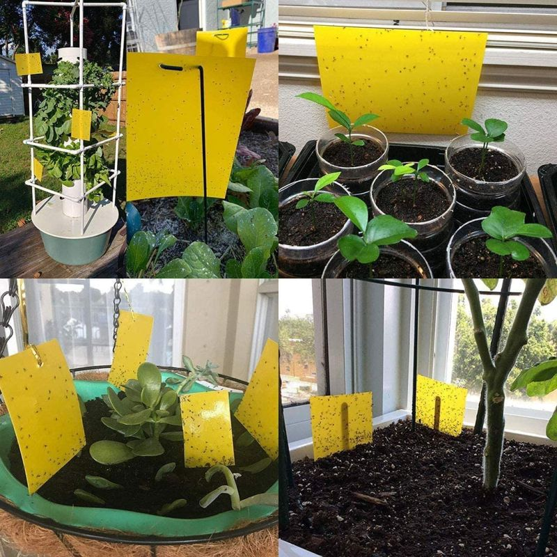Kensizer 30-Pack Yellow Sticky Gnat Traps Killer for Indoor/Outdoor Flying Plant Insect