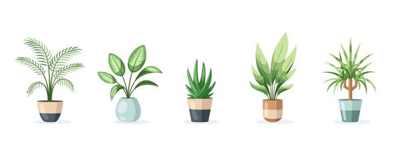 Easy House Plants For Beginners And Those Without Time