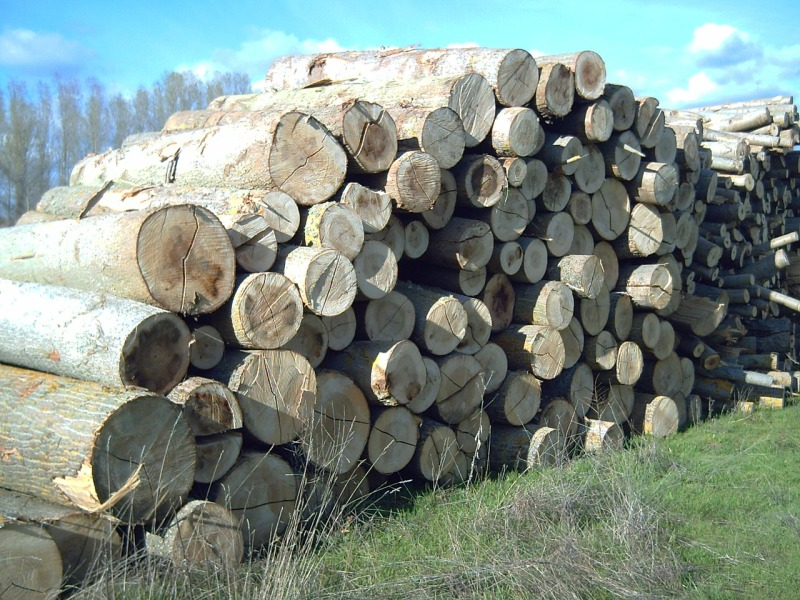 Is Poplar Wood A Hardwood?