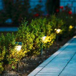 Why Plant Flowers That Bloom At Night