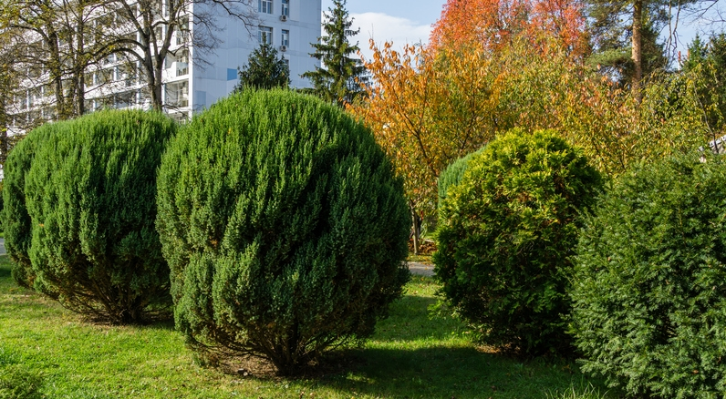Consider Some of the Best Hedge Plant Ideas for Your Landscape