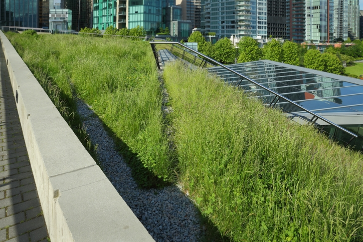 Green Roof Insulation